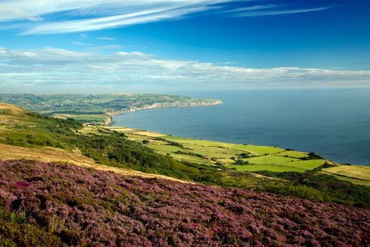 Heather on Yorkshire Coastline - Wayside Park & Lakes