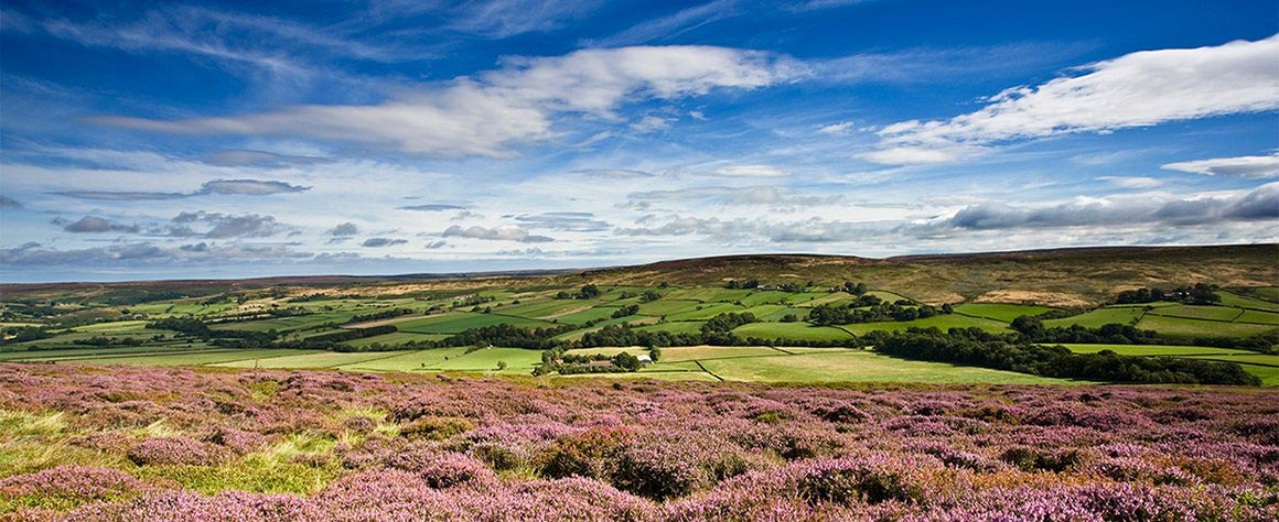 Heather on the North Yorkshire Moors - Wayside Park & Lakes
